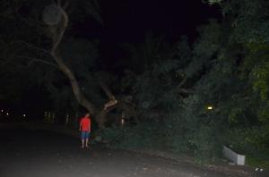 It is a tree...In my driveway!
