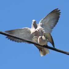Bird porn, downloaded from www.birdinginformation.com